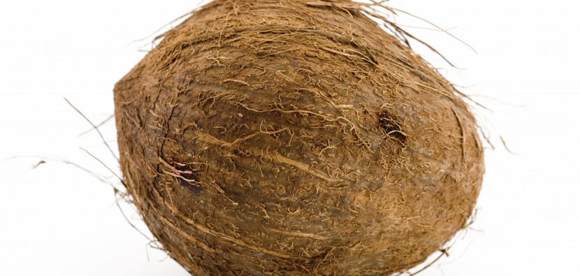 Coconut_Large