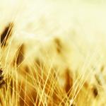 grain free dieting